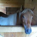Duke in the barn